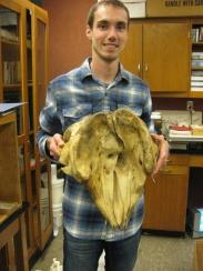 UWSP whale skull
